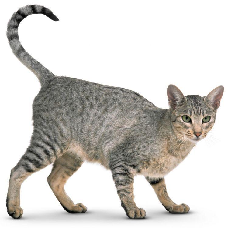 Arti Bahasa Inggrisnya Naik: 9 Arti Bahasa Tubuh Kucingmu Yang Memberimu Petunjuk Soal