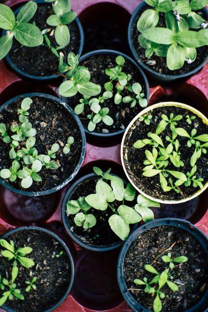 Menanam sayuran sendiri mampu meningkatkan kepuasan masakan