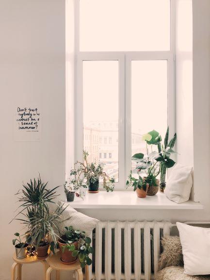 Menghidupkan ruangan dengan menambahkan tanaman
